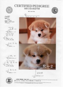 puppy_information_img016